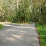 droga przez borowski las