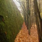ogrom zieleni na ścianie