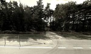 Wjazd do zbiorowej mogiły w lesie