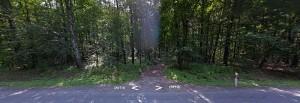 obóz porasta dziś gęsty las